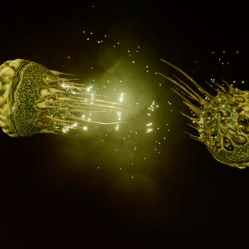 Luteolum Capsule Mollusc