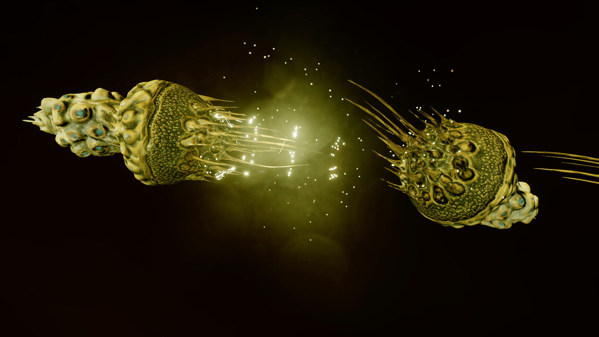Capsule Mollusc